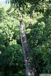 Savaii - Canopy Walkway