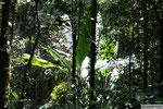 Wanderung in den Cameron Highlands