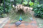 KL - Vogelpark
