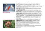 Konzept Re-Art t(W)oo 2013 Seite 20