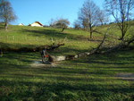 arbre par terre