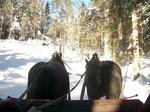 Pferdeschlittenfahrt durch die wunderschön verschneite Winterlandschaft