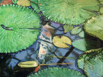 Koi Karpfen (2018) Öl auf Leinwand 120 x 90 cm