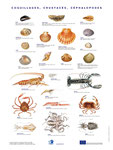 Affiche crustacés OFIMER - F.Martin©