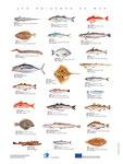 Affiche poissons OFIMER - F.Martin©