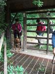 erste Herausfordeung Gitter vor dem Wildgehege