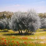 L'oliveraie      Huile/Toile      (20/20cm)      VENDUE