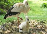 Storchenkind im Wiesental