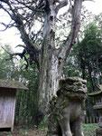 鬱蒼とした木々と小さな社。 樹齢どのくらいでしょうかね~。