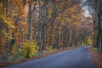 Herbstwald Ihme-Roloven #6