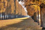Bäume im Herbst #1