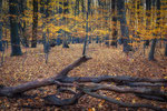 Herbstwald Ihme-Roloven #3