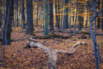 Herbstwald Ihme-Roloven #2