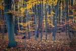 Herbstwald Ihme-Roloven #1