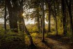 Wald Hemmingen #1