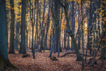 Herbstwald Ihme-Roloven #5
