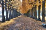 Bäume im Herbst #2