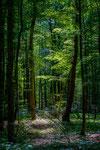 Im Wald zwischen Laatzen und Sehnde
