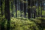Wald Wedemark #1