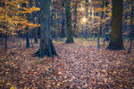 Herbstwald Ihme-Roloven #4