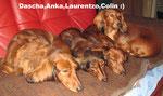 Dascha,Anka,Larson &Colin :)