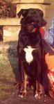 Bobbi - gehörte der Nachbarsfamilie Hotes (ab ca. 1973)