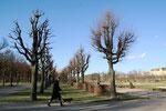 Kahle Baumreihe im März.  Garten vor dem Schloss Charlottenburg. Foto: Helga Karl