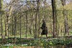 Eine Frau geht spazieren. Bäume, der Waldboden mit Buschwindröschen bedeckt im April im Schlosspark. Foto: Helga Karl