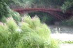Regensturm im Juli, verwehte Büsche und Rote Brücke. Foto: Helga Karl