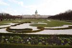 Die erste der wechselnden Bepflanzungen mit Blumen im  Schlosspark Charlottenburg im März. Foto: Helga Karl