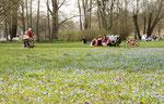 Aprilsonne im Schlosspark Charlottenburg in Berlin. Menschen sitzen auf der Wiese mit blauen Blumen. Foto: Helga Karl