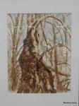 Birke, Moorlauge, 30 x 20 cm