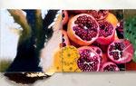 Esst mehr Obst-Leporello, 1. Baum und Granatäpfel