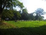 Park zum Gutshaus Frehne