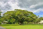 この~木なんの木くらい大きい木。