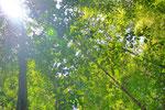 熱帯雨林の緑はいろんな緑色があってキレイ。