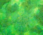 Nature #11 アクリル、アブソルバン、キャンバス 38×45.5cm