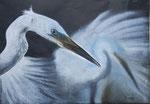 Edle Erscheinung: Silberreiher (Egretta alba), Pastell, 30x40, 2016
