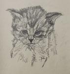 Katzenwelpe 1, Bleistift, 40x30, 1971