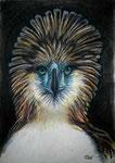 Philippinenadler, Pastell, 60x40, 2018