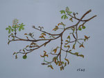 Der narrische Kastanienbaum, Pastell, 30x40, 2013