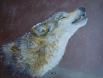 Heulender Wolf, Pastell, 30x40, 2013