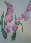 Gladiolen, Pastell, 60x35, 2013