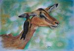 Ohrenschmaus, Pastell, 30x40, 2014