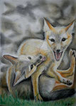 Spielende Füchse, Pastell. 40x30, 2015