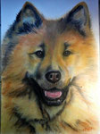 Chow Chow, Pastell, 60x40, 2017