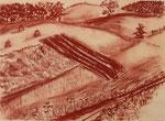 Sonne über den Feldern, Rötel, 1966