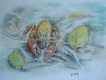 """Flusskrebs """"Jonny"""", Pastell, 30x40, 2013"""