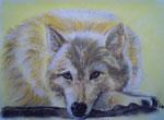 Arktischer Wolf, Pastell, 30x40, 2013