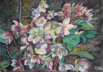 Bunte Blätter 16/ Schneerosen (Helleborus niger), 24x34, Pastell, 2016